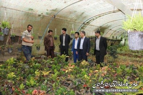 بازدید مدیر صندوق استان گلستان از ظرفیت های ایجاد اشتغالو طرح های  گلخانه ای (تولید گلهای آپارتمانی)روستاي کلاسنگیان شهرستان گرگان